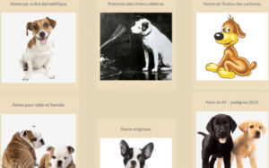 screenshot-www-nom-de-chien-com-2016-06-08-15-29-44